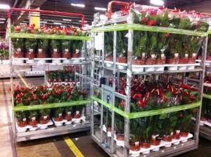 Containere Bursa de Flori Amsterdam