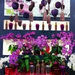 Expozitia de Flori Amsterdam 10