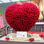 Expozitia de Flori Amsterdam 11
