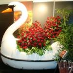Expozitia de Flori Amsterdam 14