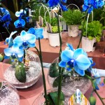 Expozitia de Flori Amsterdam 2