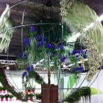 Expozitia de Flori Amsterdam 9