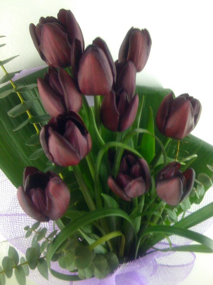 Gasiti la Floria cele mai frumoase lalele mov