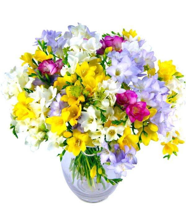 Flori de 8 martie – Ziua internationala a femeii - Blogul ...