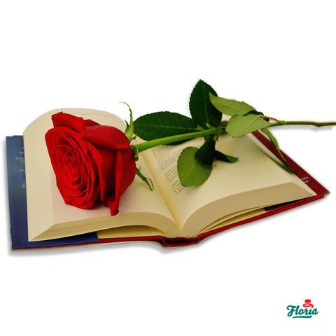 flori-trandafirul-iubirii-28802