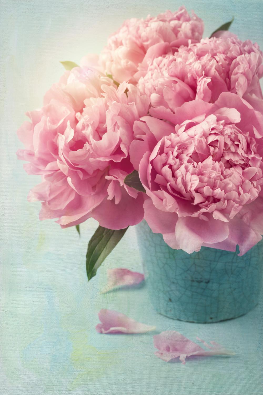 Din dragoste pentru flori – Bujori