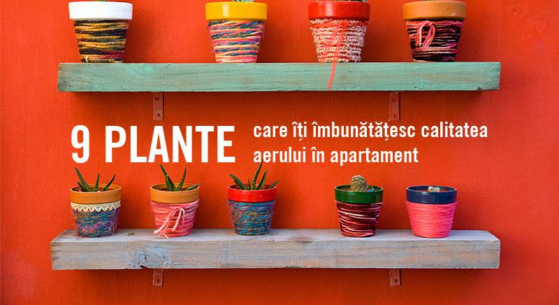 9 plante perfecte pentru apartament!