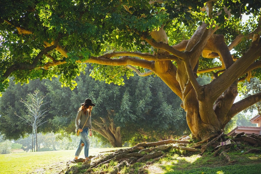 tree-690363_1280