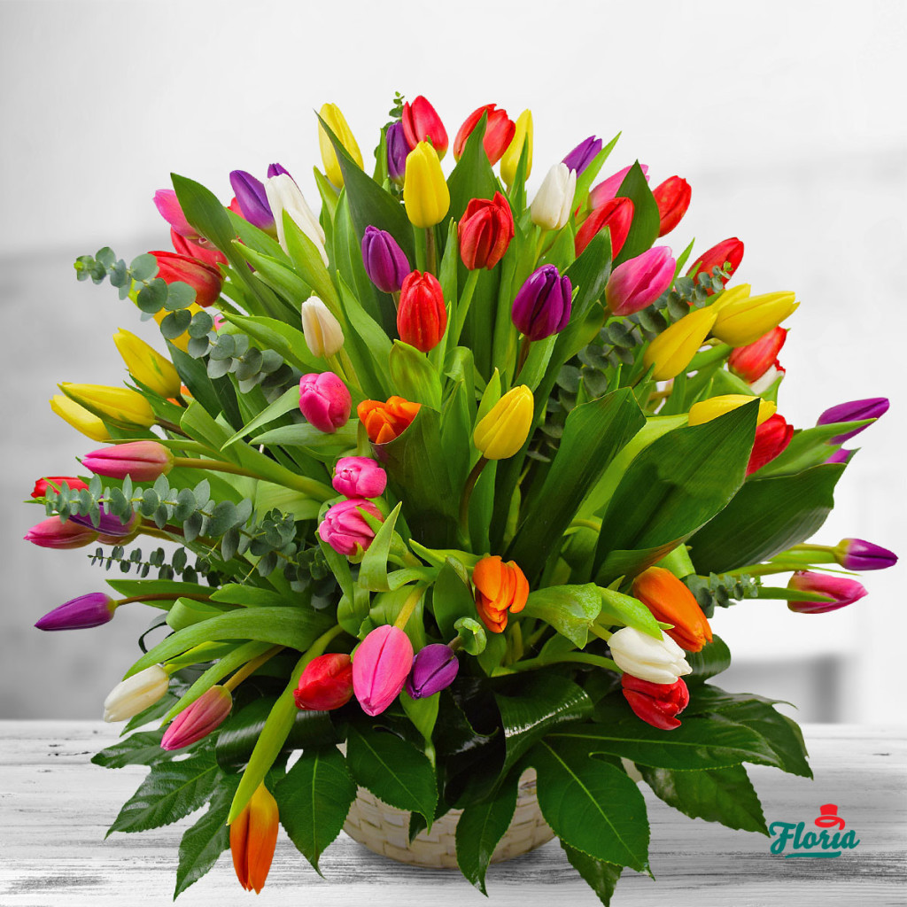 flori-cos-cu-101-lalele-multicolore-33425