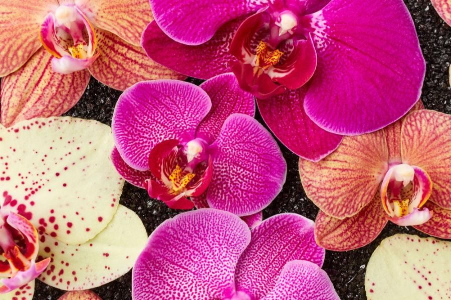 De ce să oferi orhidee și care este semnificația uimitoare a acestei flori