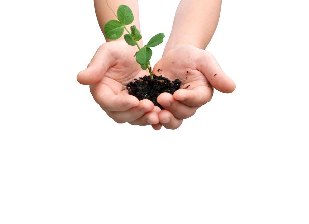 Programul de replantare – Floria