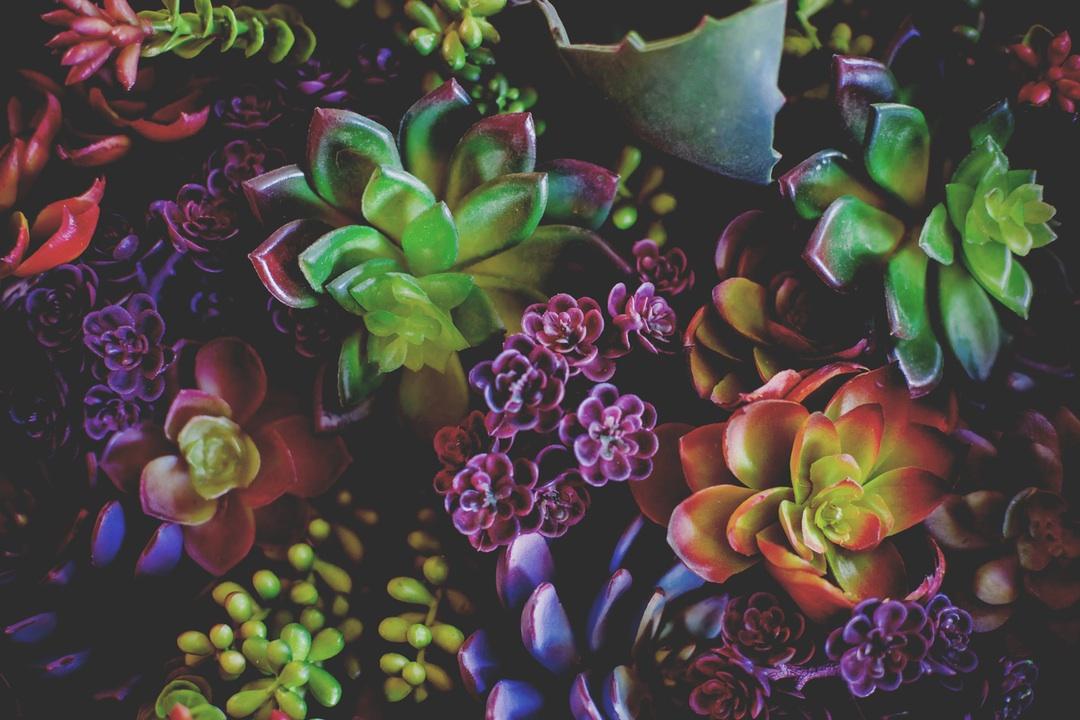 Psihologia culorilor. Cum ne putem colora viața cu ajutorul florilor