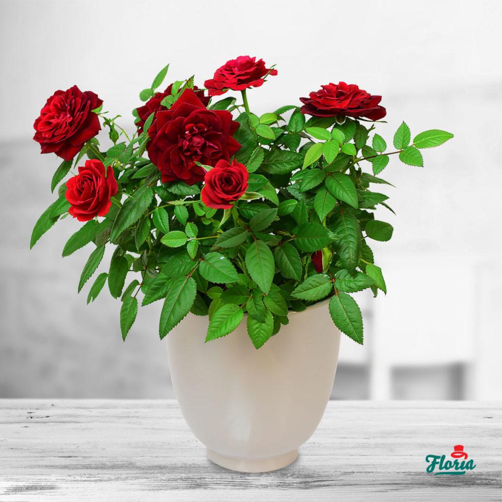Plante naturale pentru apartament