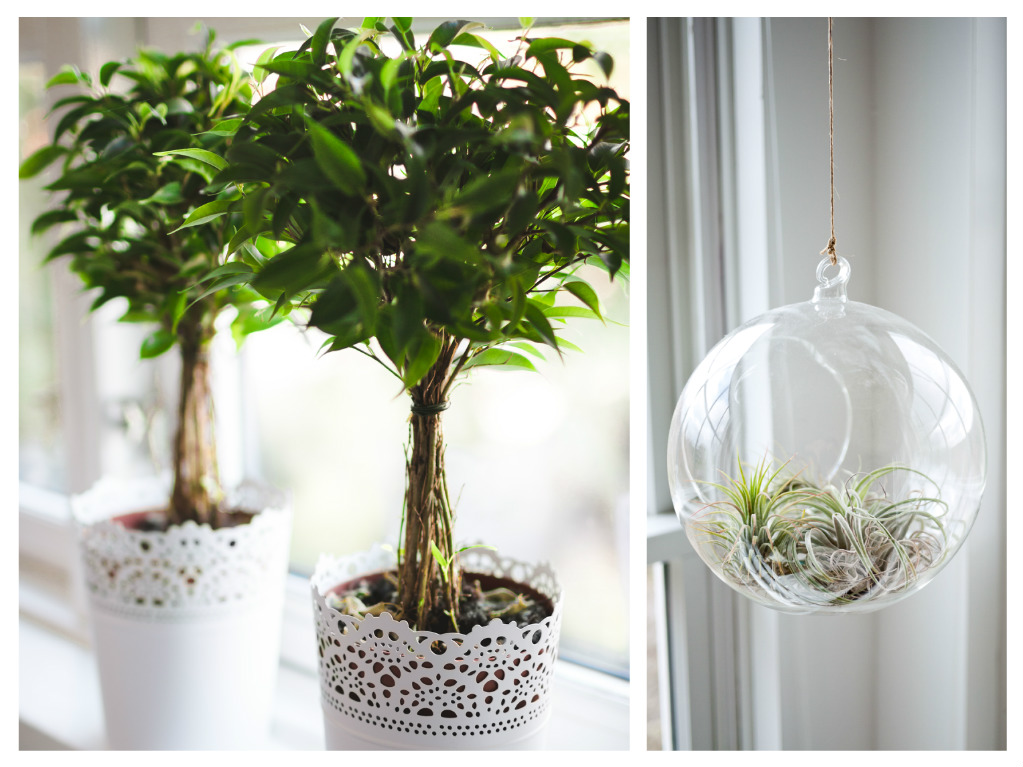plante pentru balcon