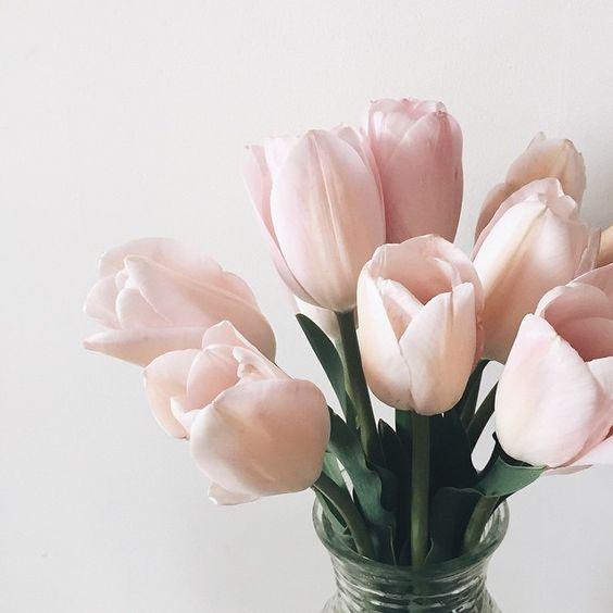 20 de curiozitati despre flori – Stiati ca… ?
