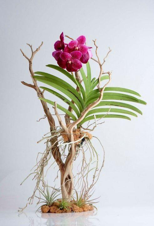 curiozitati-despre-flori-orhidee-2