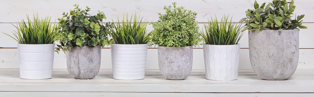 4 Feluri de flori de camera usor de ingrijit