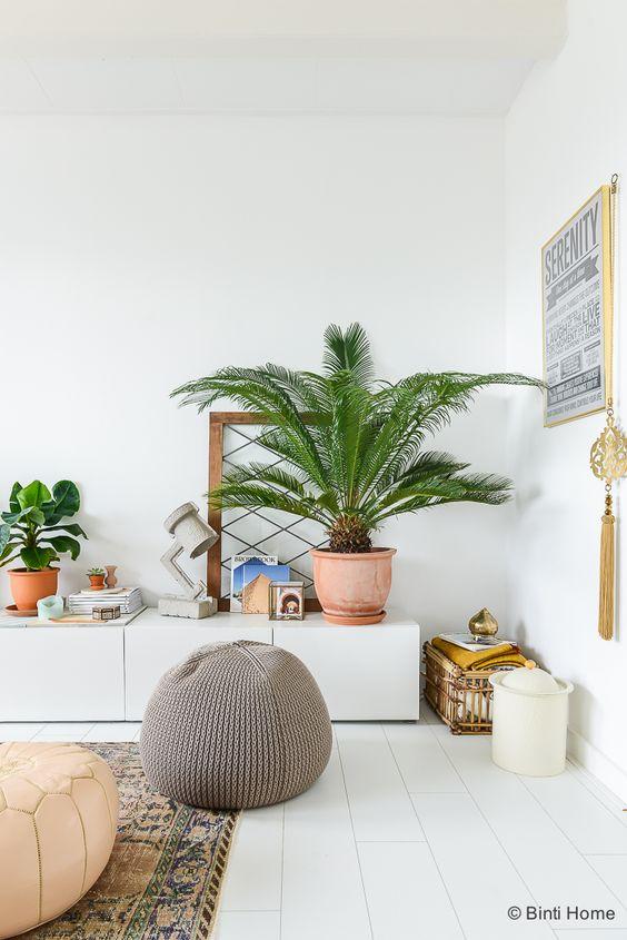 ingrijirea-plantelor-de-apartament-3