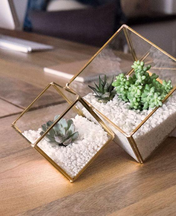 ingrijirea plantelor de apartament
