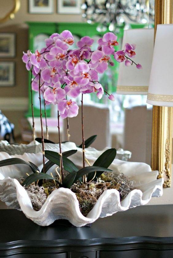 8 sfaturi pentru ingrijirea plantelor de ghiveci
