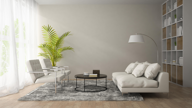 ingrijire plante de apartament