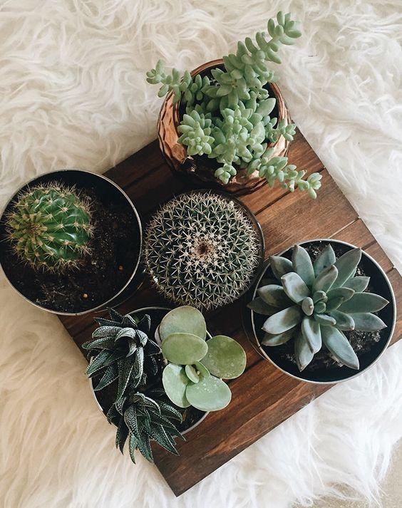 Plantele de apartament care rezista cel mai bine pe perioada iernii