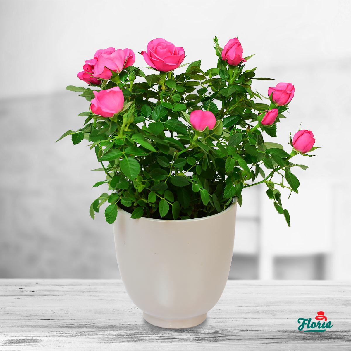 Top 4 mituri despre ingrijirea plantelor de apartament