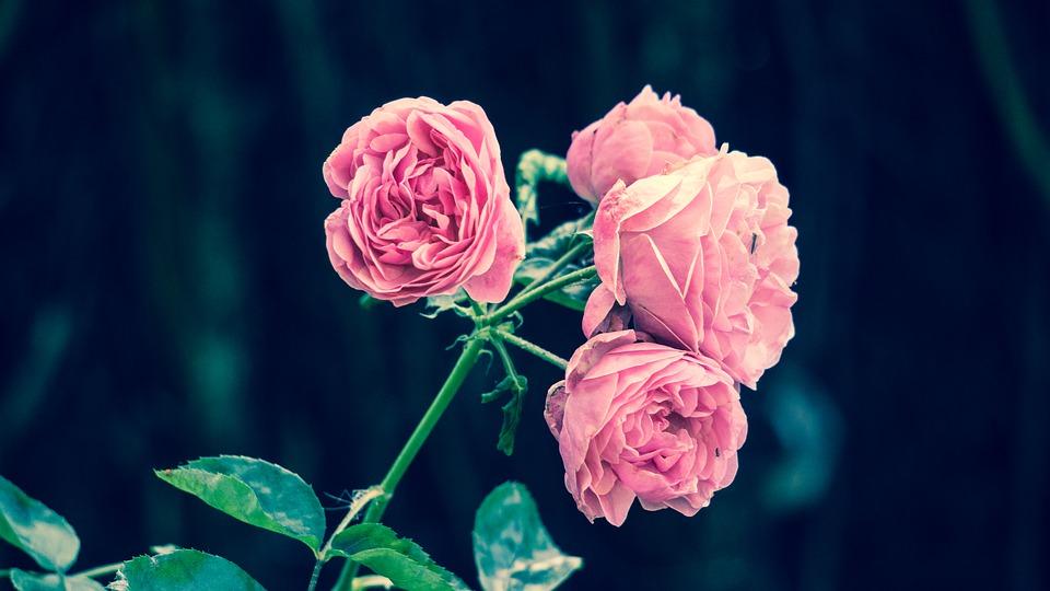 Astrologia florilor: ce flori se potrivesc zodiilor
