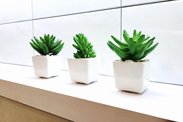 6 plante care se vor descurca de minune in baia ta